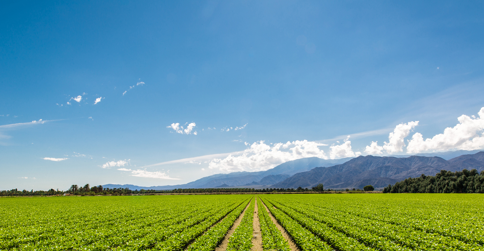 Agricultural Field image